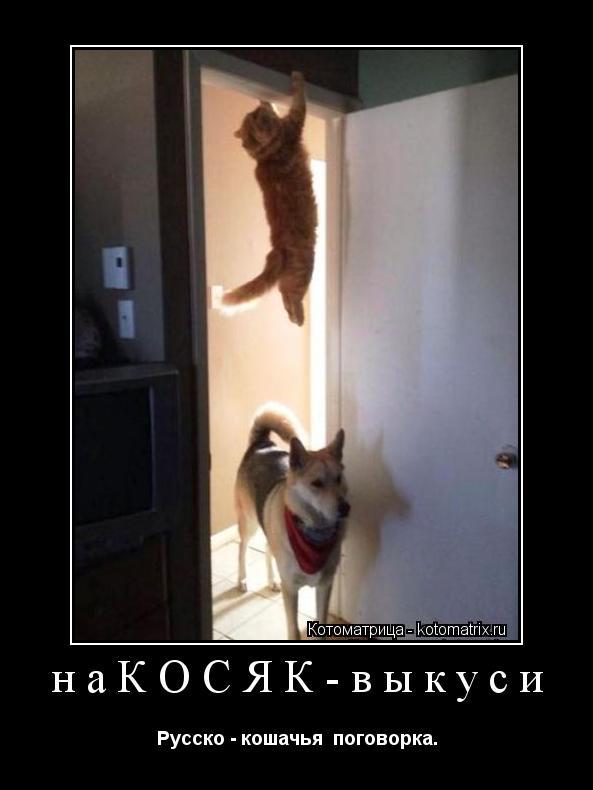 Котоматрица: наКОСЯК-выкуси Русско - кошачья  поговорка.