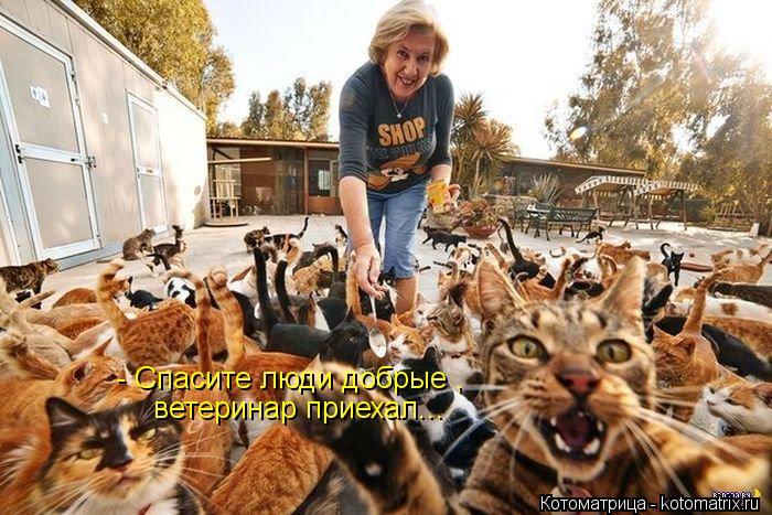 Котоматрица: - Спасите люди добрые , ветеринар приехал...