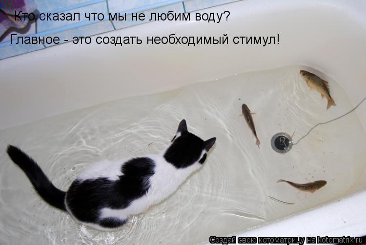 Котоматрица: Кто сказал что мы не любим воду? Главное - это создать необходимый стимул!