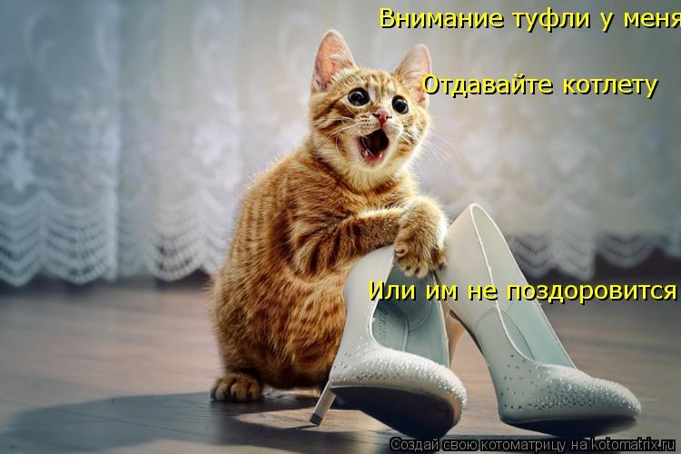 Котоматрица: Отдавайте котлету  Или им не поздоровится ! Внимание туфли у меня !