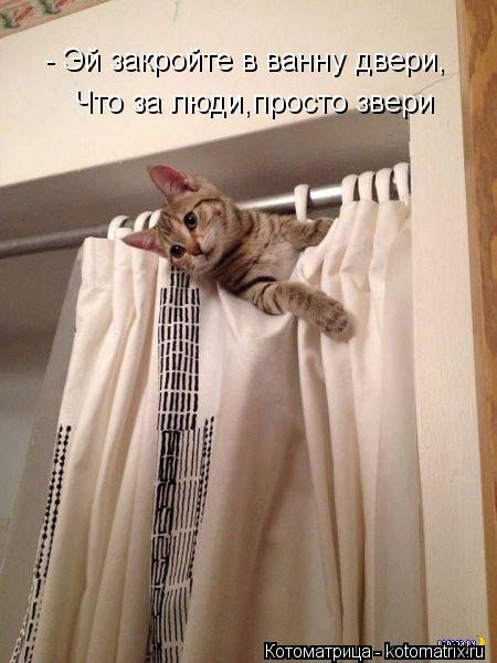 Котоматрица: - Эй закройте в ванну двери, Что за люди,просто звери