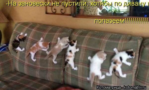 Котоматрица: полазеем!!!!!!!!!!!!! -На зановески не пустили; хотябы по дивану полазеем!!!!!!!!!!!!!