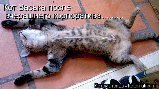 Котоматрица: вчерашнего корпоратива Кот Васька после .........