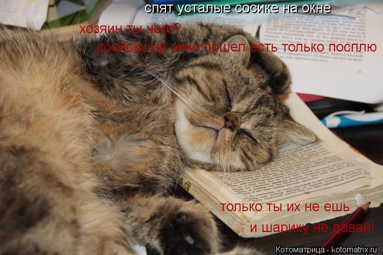 Котоматрица: спят усталые сосике на окне хозяин ты чего? сосиски на окне пошел есть только посплю только ты их не ешь и шарику не давай!