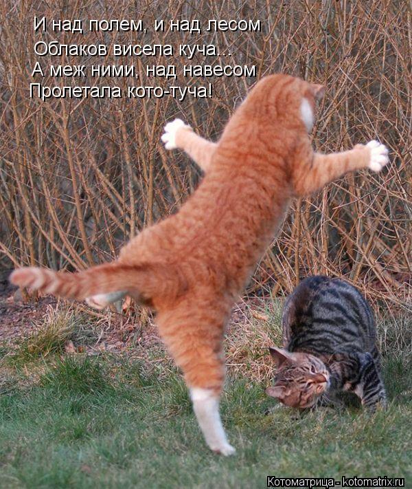 Котоматрица: И над полем, и над лесом Облаков висела куча... А меж ними, над навесом Пролетала кото-туча!