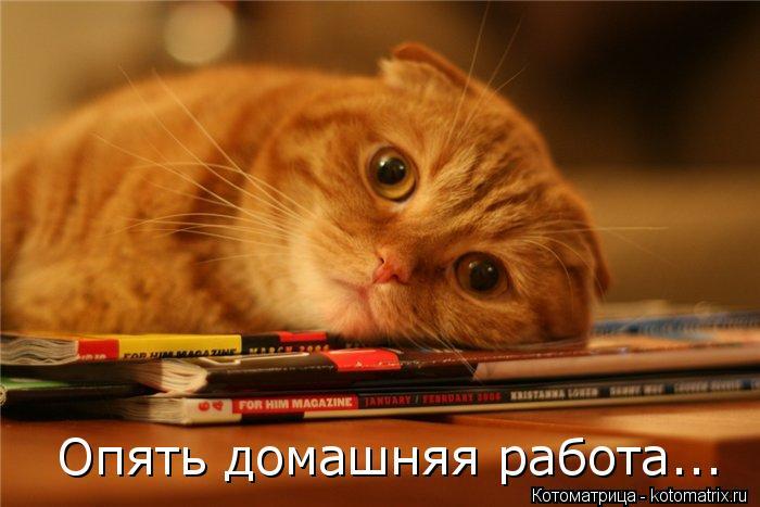 Котоматрица: Опять домашняя работа...