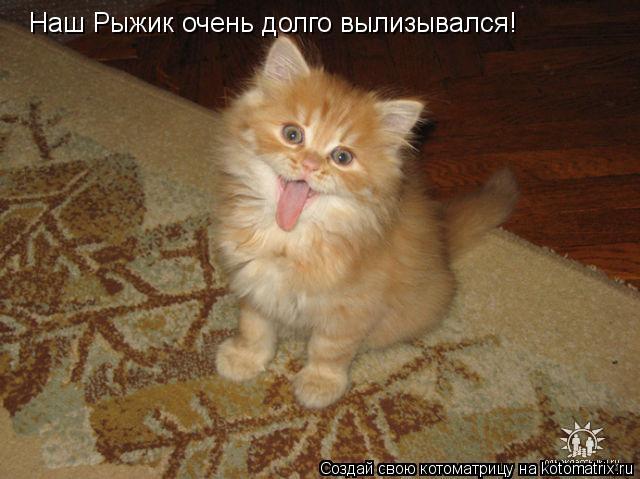 Котоматрица: Наш Рыжик очень долго вылизывался!