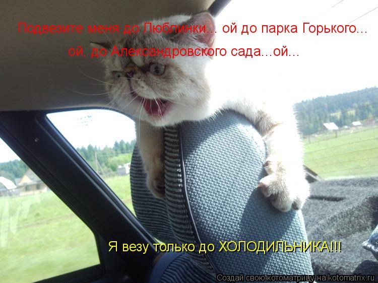 Котоматрица: Подвезите меня до Люблинки... ой до парка Горького...  ой, до Александровского сада...ой... Я везу только до ХОЛОДИЛЬНИКА!!!