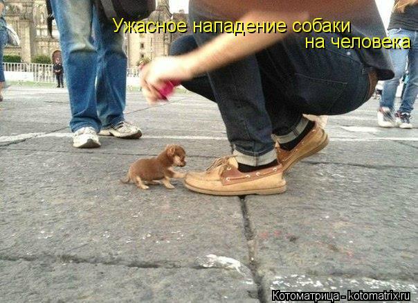 Котоматрица: Ужасное нападение собаки  на человека !