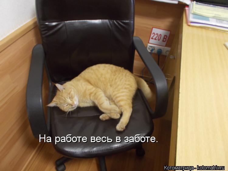 Котоматрица: На работе весь в заботе.