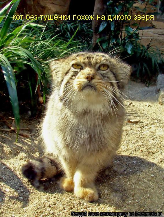 Котоматрица: кот без тушёнки похож на дикого зверя