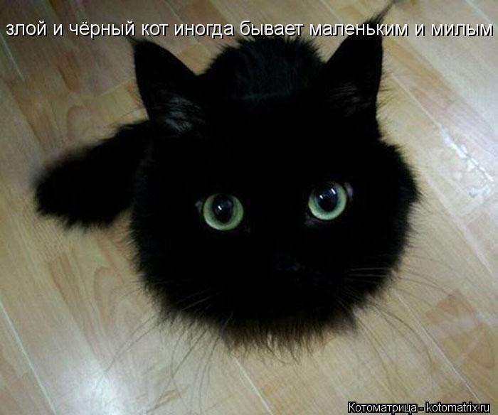 Котоматрица: злой и чёрный кот иногда бывает маленьким и милым