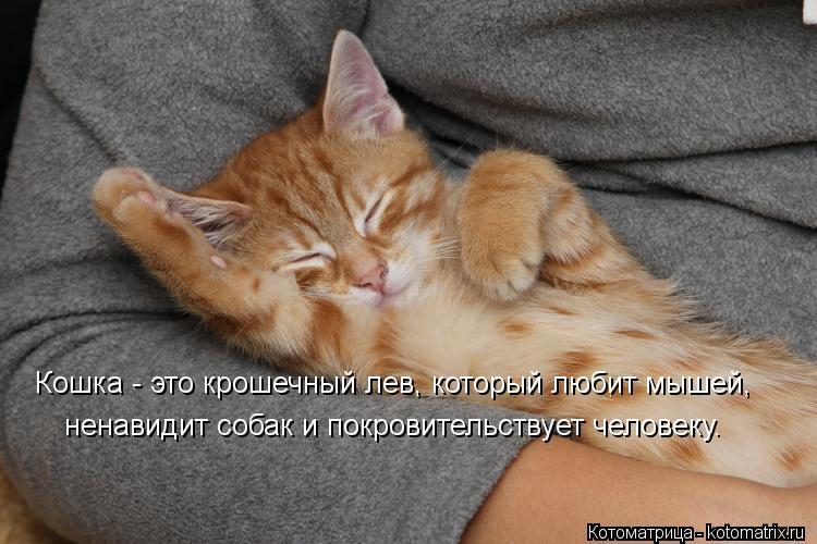 Котоматрица: Кошка - это крошечный лев, который любит мышей,   ненавидит собак и покровительствует человеку.