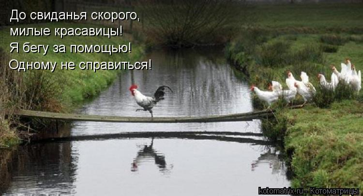 Котоматрица: До свиданья скорого, милые красавицы! Я бегу за помощью! Одному не справиться!