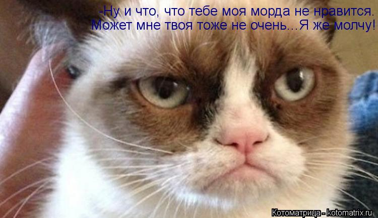 Котоматрица: -Ну и что, что тебе моя морда не нравится. Может мне твоя тоже не очень...Я же молчу!