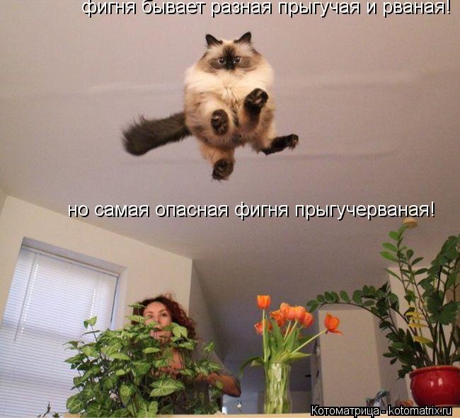 Котоматрица: фигня бывает разная прыгучая и рваная! но самая опасная фигня прыгучерваная!