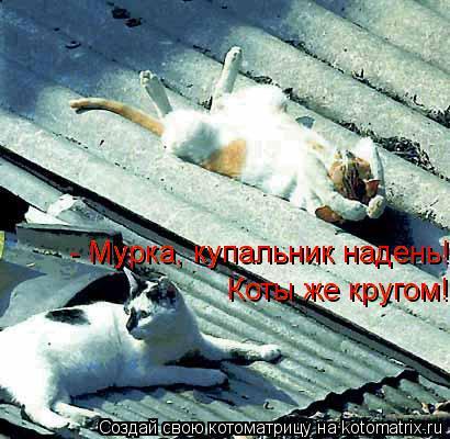 Котоматрица: - Мурка, купальник надень! - Мурка, купальник надень! Коты же кругом! Коты же кругом!