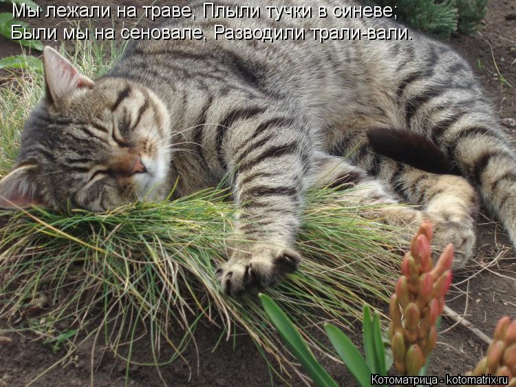 Котоматрица: Мы лежали на траве, Плыли тучки в синеве;  Были мы на сеновале, Разводили трали-вали.