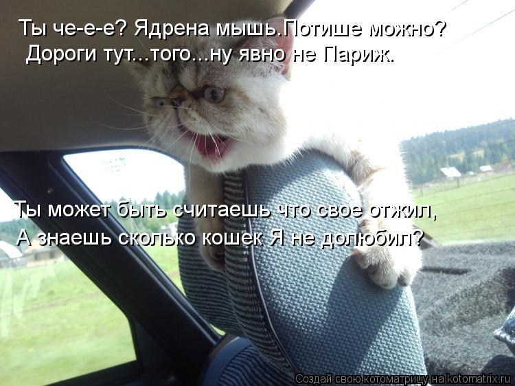 Котоматрица: Ты че-е-е? Ядрена мышь.Потише можно? Дороги тут...того...ну явно не Париж. Ты может быть считаешь что свое отжил, А знаешь сколько кошек Я не дол