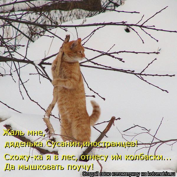 Котоматрица: Схожу-ка я в лес, отнесу им колбаски... Да мышковать поучу! Жаль мне, дяденька Сусанин,иностранцев!