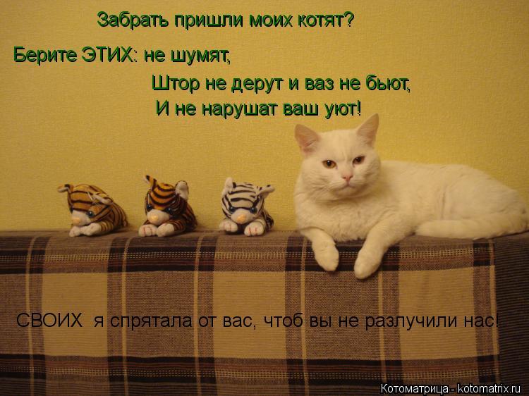 Котоматрица: Забрать пришли моих котят?  Берите ЭТИХ: не шумят, Штор не дерут и ваз не бьют, И не нарушат ваш уют! СВОИХ  я спрятала от вас, чтоб вы не разлуч