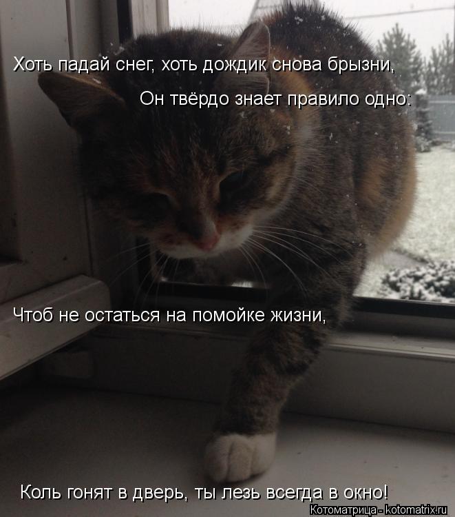 Котоматрица: Хоть падай снег, хоть дождик снова брызни, Он твёрдо знает правило одно: Чтоб не остаться на помойке жизни, Коль гонят в дверь, ты лезь всегда