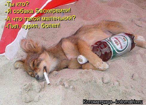Котоматрица: -Ты кто? -Я собака Баскервили! -А что такой маленький? -Пил, курил, болел!