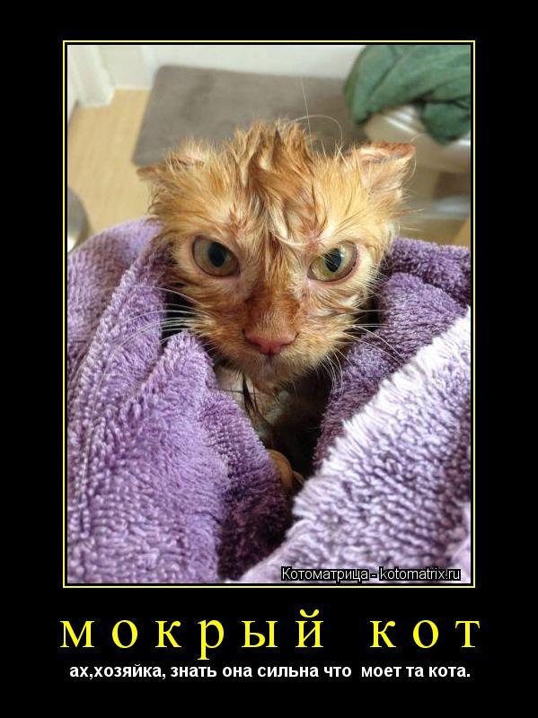 Котоматрица: мокрый кот ах,хозяйка, знать она сильна что  моет та кота.
