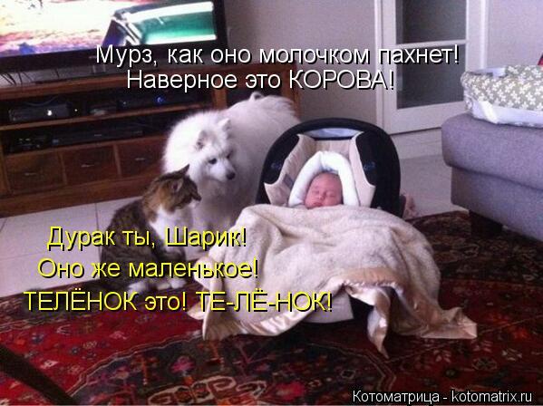 Котоматрица: Мурз, как оно молочком пахнет! Наверное это КОРОВА! Дурак ты, Шарик! Оно же маленькое! ТЕЛЁНОК это! ТЕ-ЛЁ-НОК!