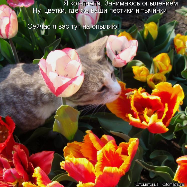 Котоматрица: Я кот-пчела. Занимаюсь опылением Ну, цветки, где же ваши пестики и тычинки Сейчас я вас тут на опыляю!