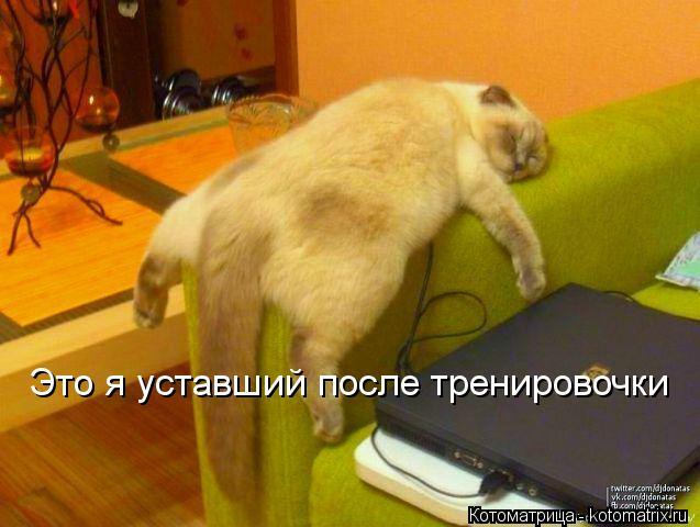 Котоматрица: Это я уставший после тренировочки