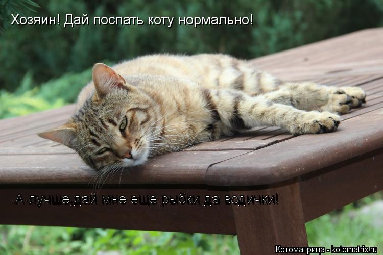 Котоматрица: Хозяин! Дай поспать коту нормально! А лучше,дай мне еще рыбки да водички! А лучше,дай мне еще рыбки да водички!