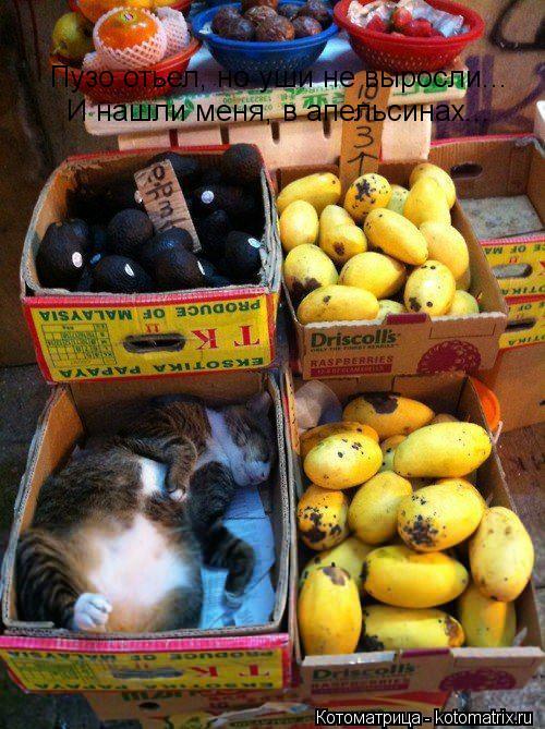 Котоматрица: И нашли меня, в апельсинах... Пузо отьел, но уши не выросли...