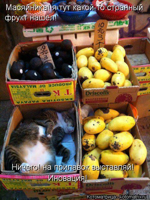 Котоматрица: Масяйника! я тут какой-то странный фрукт нашёл! Ничего! на прилавок выставляй! Иновация!