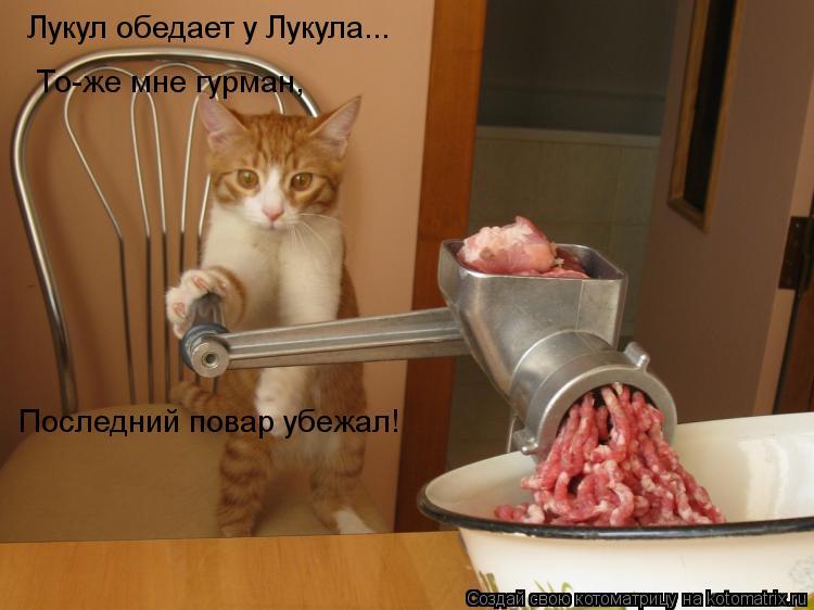 Котоматрица: Лукул обедает у Лукула... То-же мне гурман, Последний повар убежал!