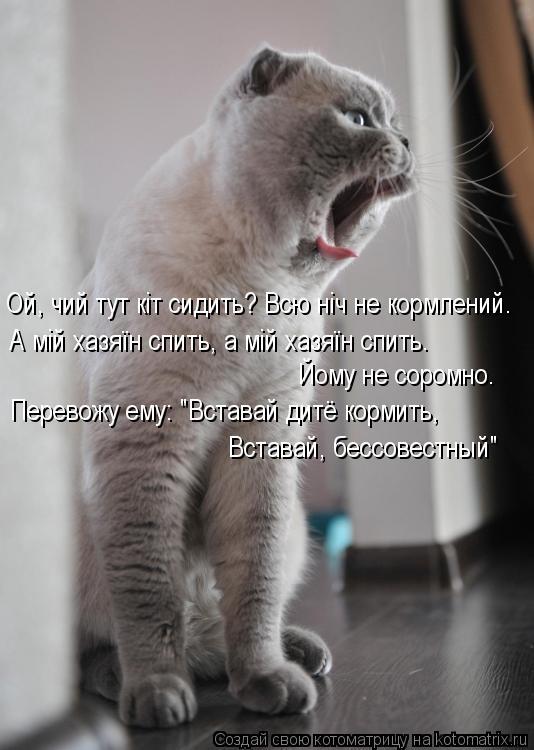 """Котоматрица: Ой, чий тут кіт сидить? Всю ніч не кормлений. А мій хазяїн спить, а мій хазяїн спить.  Йому не соромно.  Перевожу ему: """"Вставай дитё кормить, Вст"""