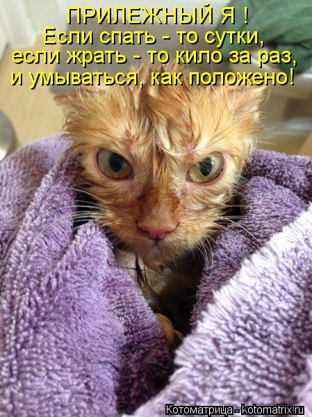 Котоматрица: ПРИЛЕЖНЫЙ Я ! Если спать - то сутки, если жрать - то кило за раз, и умываться, как положено!