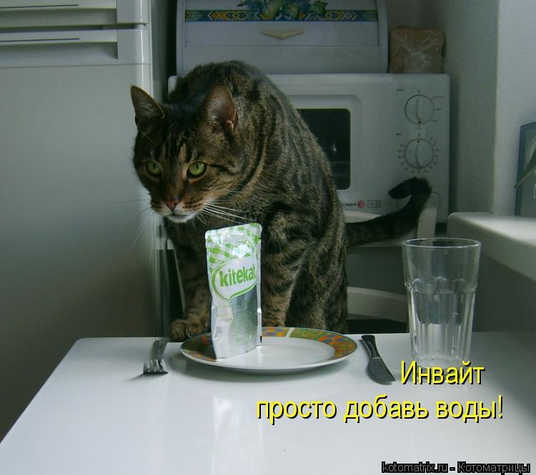 Котоматрица: Инвайт просто добавь воды!
