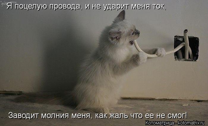 Котоматрица: Я поцелую провода, и не ударит меня ток, Заводит молния меня, как жаль что ее не смог!
