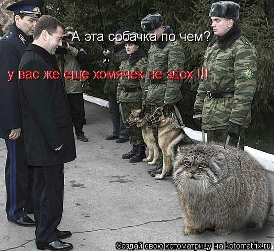 Котоматрица: А эта собачка по чем? у вас же еще хомячек не здох !!! у вас же еще хомячек не здох !!!