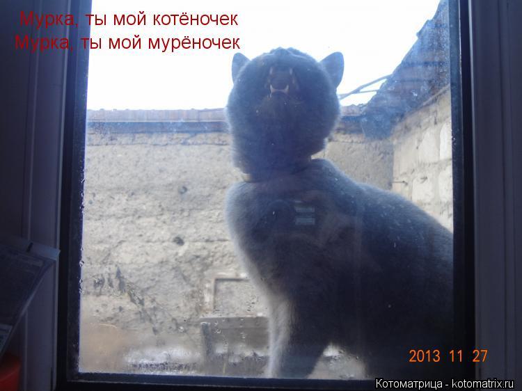 Котоматрица: Мурка, ты мой котёночек Мурка, ты мой мурёночек