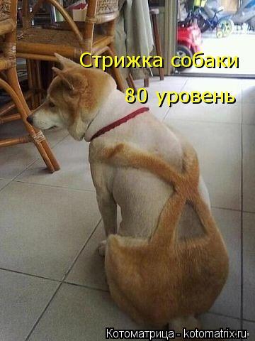 Котоматрица: Стрижка собаки 80 уровень