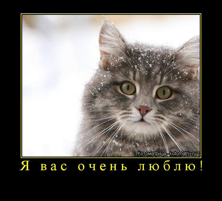 Котоматрица: Я вас очень люблю!