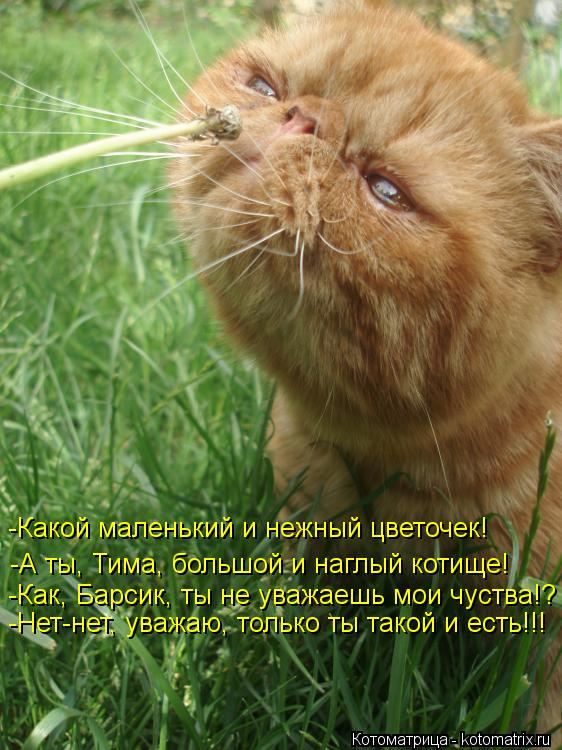 Котоматрица: -А ты, Тима, большой и наглый котище! -Какой маленький и нежный цветочек! -Как, Барсик, ты не уважаешь мои чуства!? -Нет-нет, уважаю, только ты та