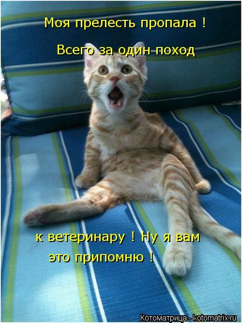 Котоматрица: Моя прелесть пропала ! Всего за один поход к ветеринару ! Ну я вам  это припомню !