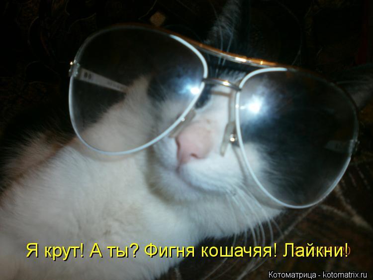 Котоматрица: Я крут! А ты? Фигня кошачяя! Лайкни!