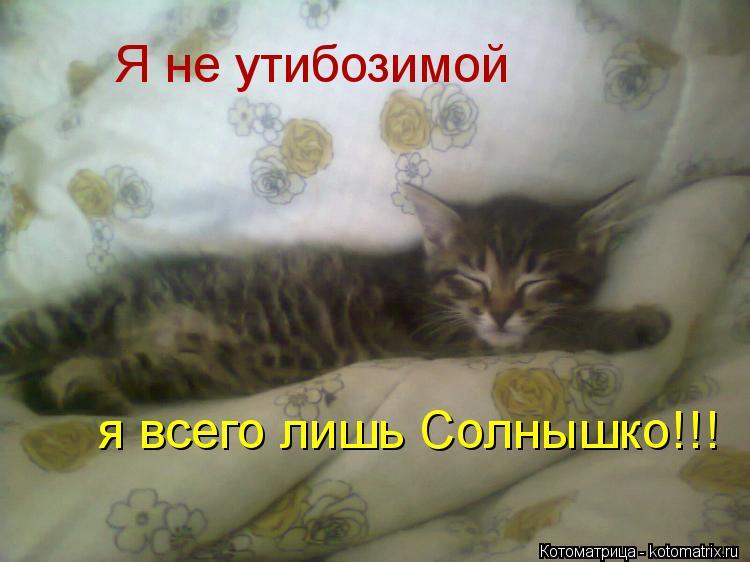 Котоматрица: Я не утибозимой я всего лишь Солнышко!!!