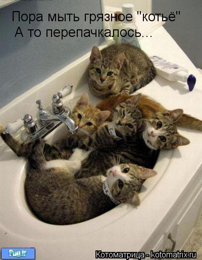 """Котоматрица: Пора мыть грязное """"котьё"""" А то перепачкалось..."""