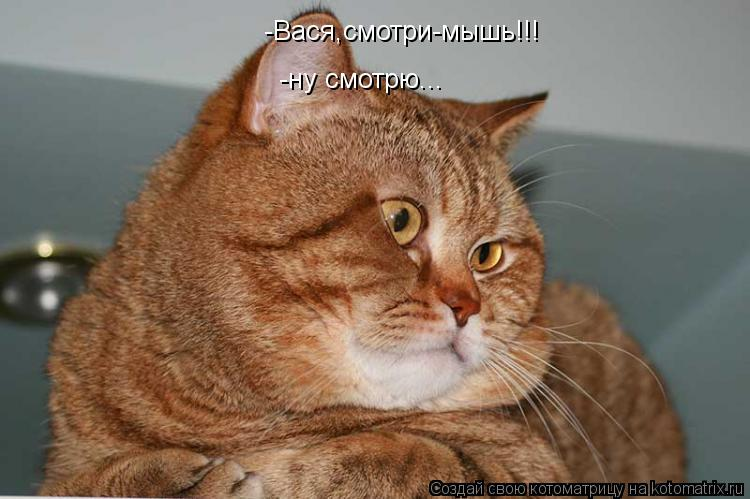 Котоматрица: -Вася,смотри-мышь!!! -ну смотрю...
