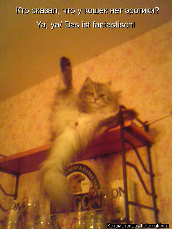 Котоматрица: Кто сказал, что у кошек нет эротики? Ya, ya/ Das ist fantastisch!